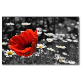 Αφίσα (μαύρο, λευκό, άσπρο, λουλούδια, άνοιξη)
